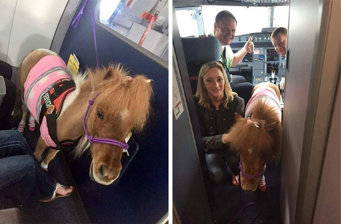service horse on plane