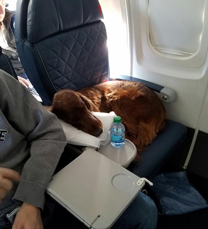 sleeping dog on first class flight