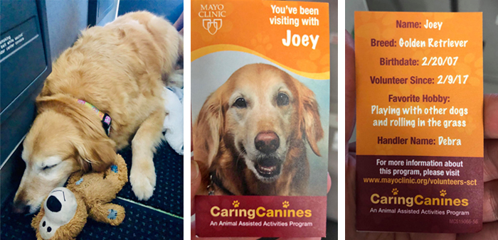 therapy dog on plane with business card