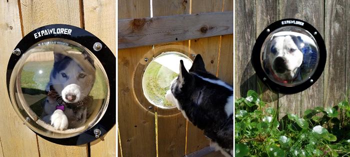 transparent acrylic dome peeking dogs