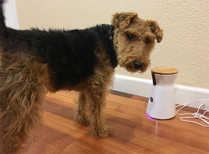 treat tossing dog camera alexa app