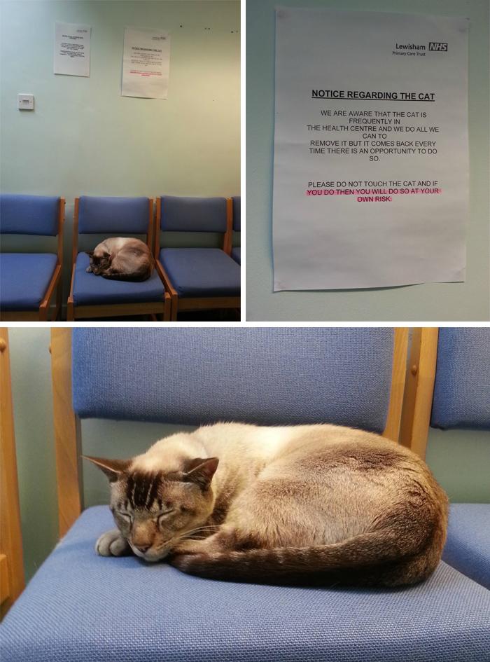 warning sign cat in hospital