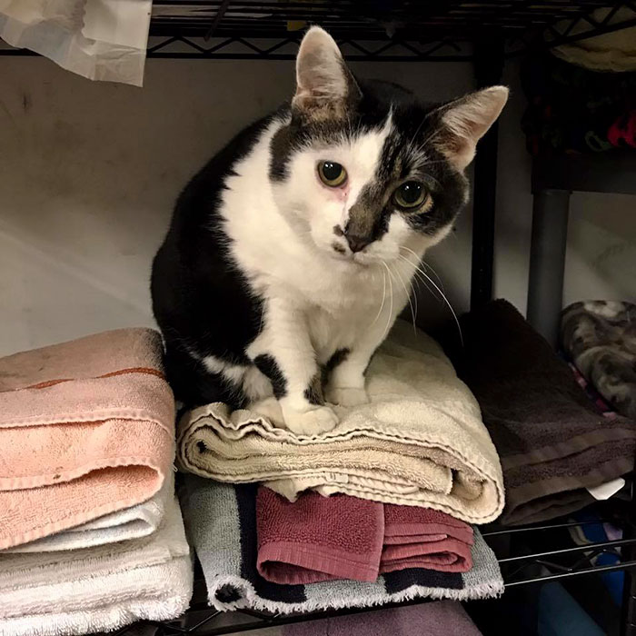 a curious cat stares while sitting on top of folded towels