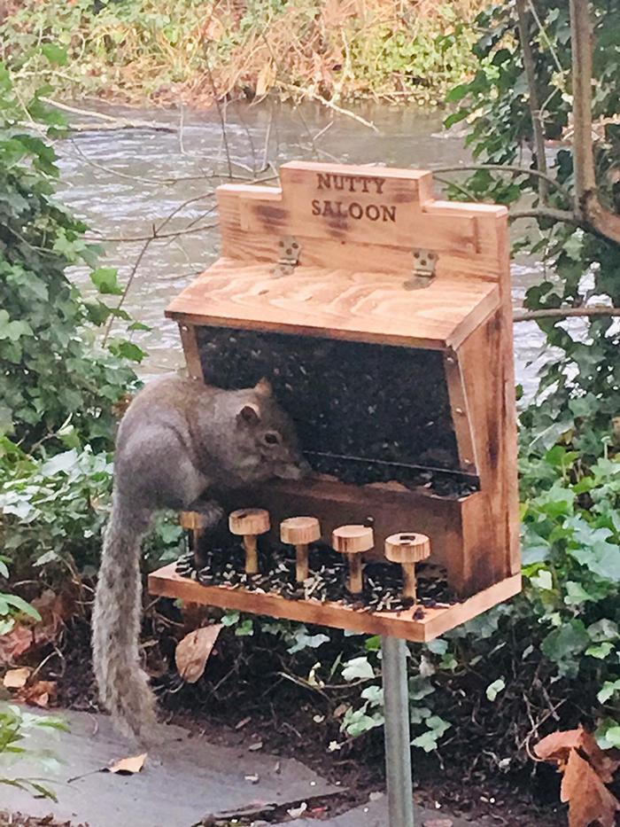 acwworx saloon for squirrel