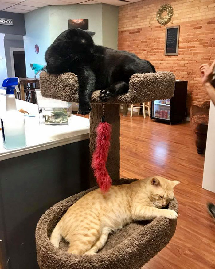 black and ginger shelter cats