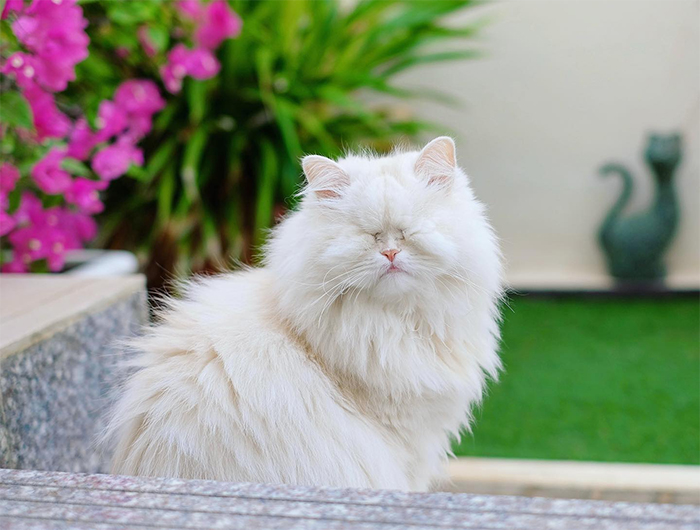 blind persian cat refuses to eat recovery