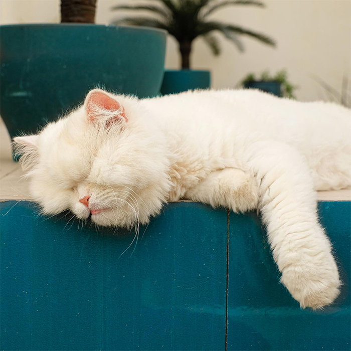 cat refuses to eat sleeping