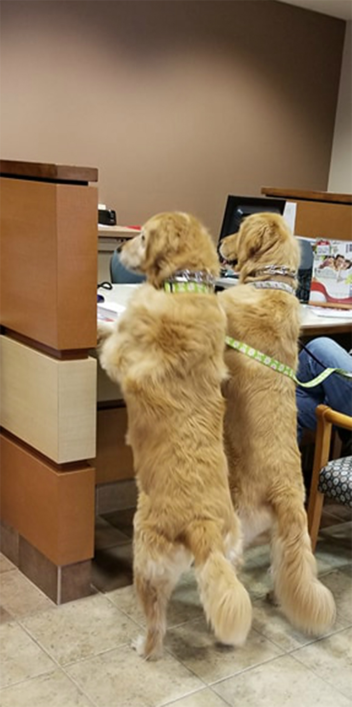 dogs opening an account