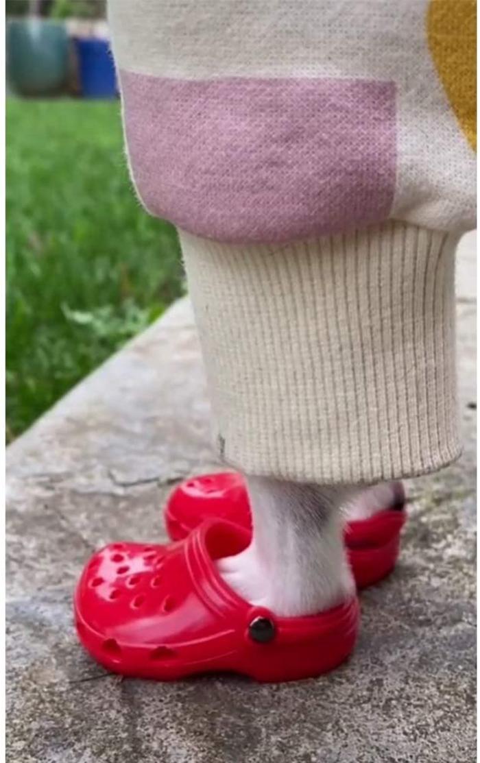 foam clogs for pets