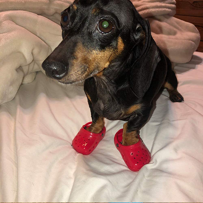 foam clogs for puppies