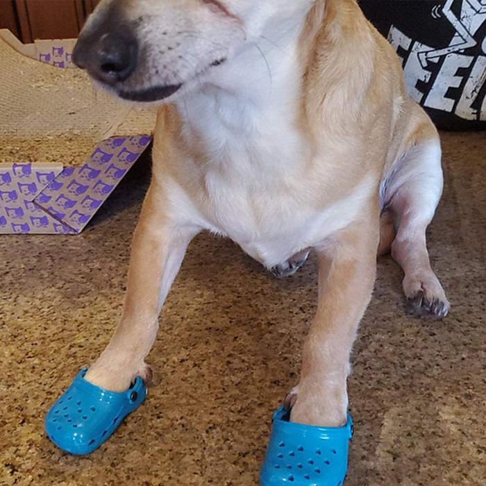 foam clogs for pups