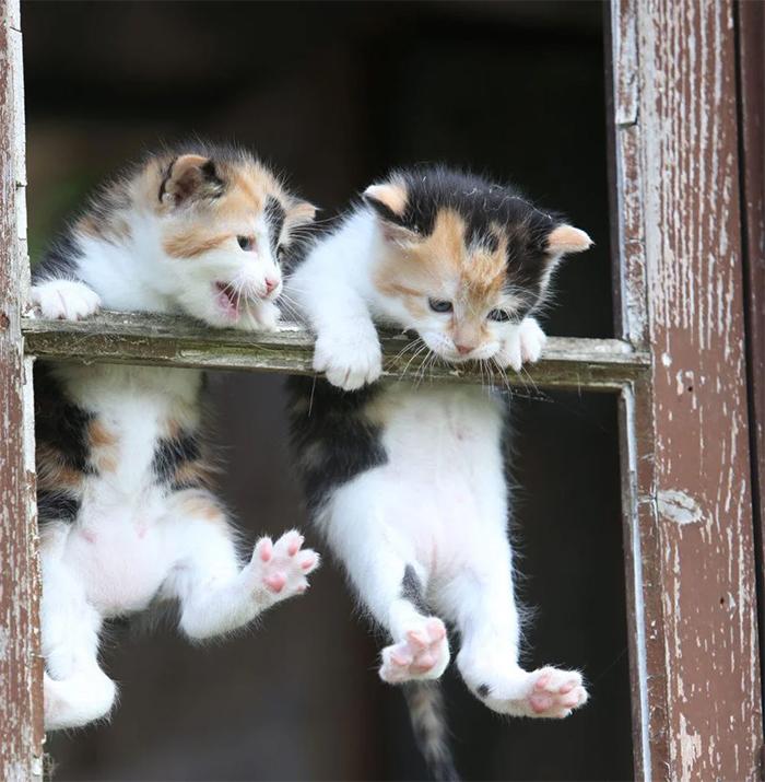 hanging kittens