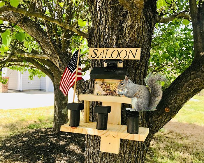 jacksonstimber saloon for squirrel