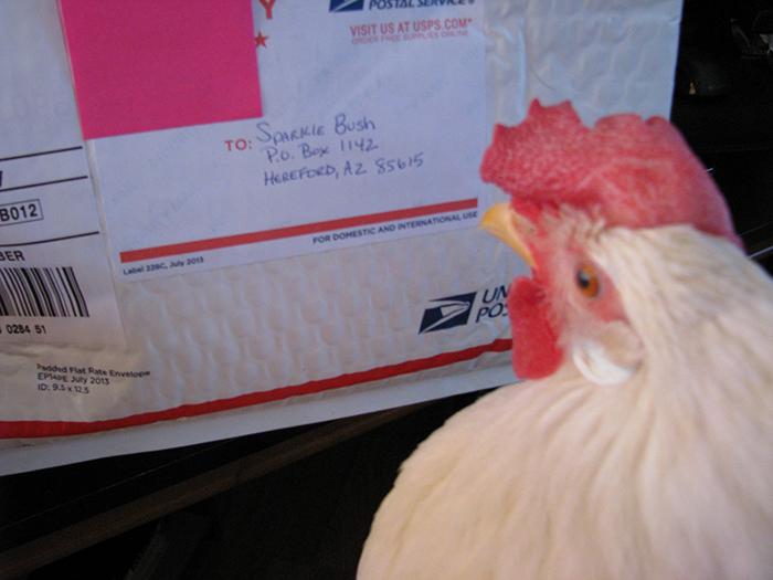 michelle bush chicken sparkle package