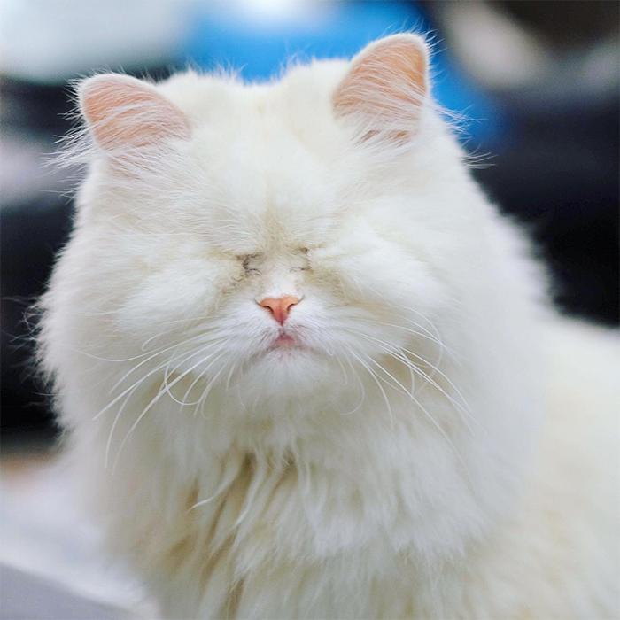 moet the blind cat no eyes