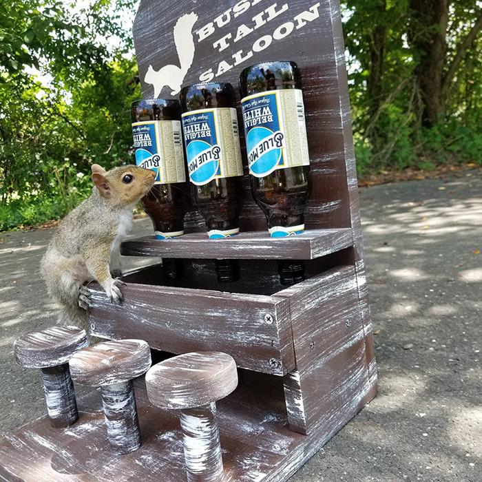 nutsaboutskwerls squirrel saloon