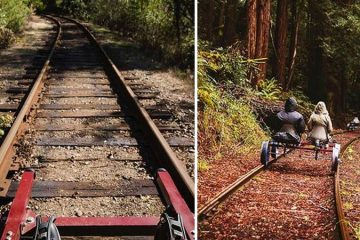 rail bike tour