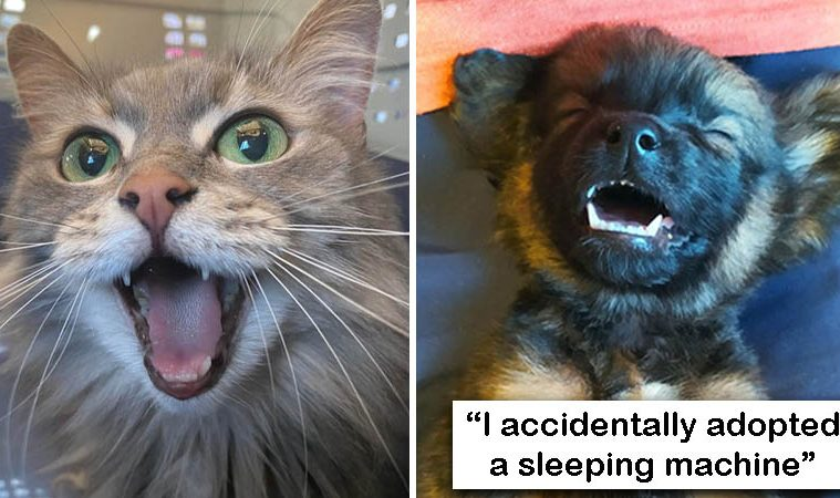 rescue pet pics