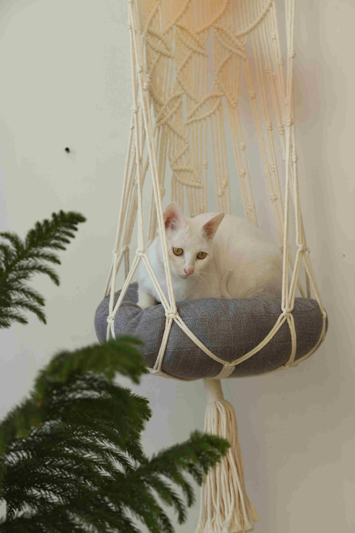 white cat curls up while inside the hanging macrame cat bed