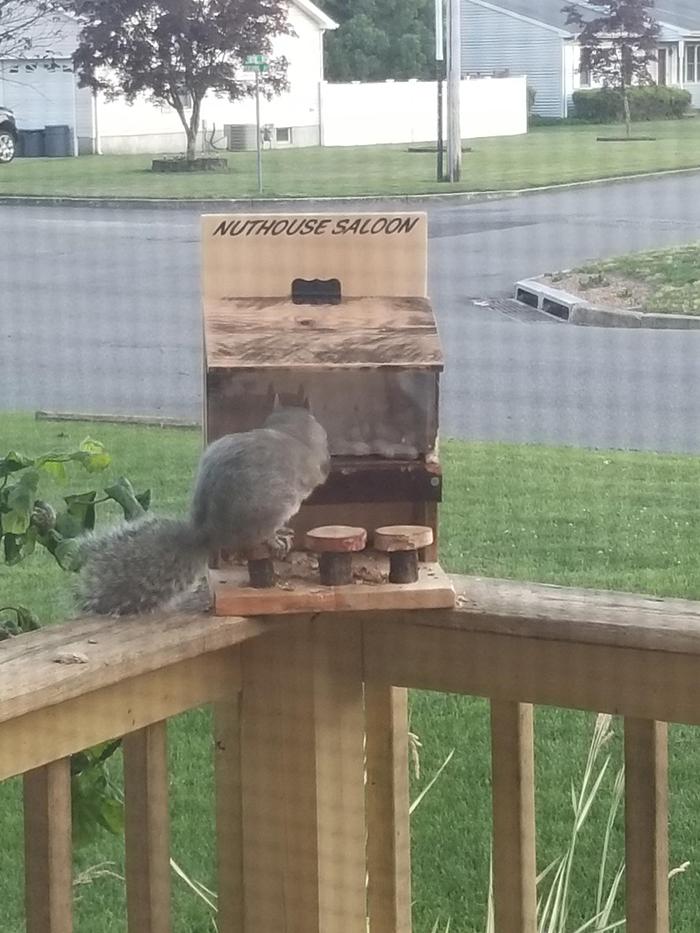 woodanthings feeder for outdoor critter