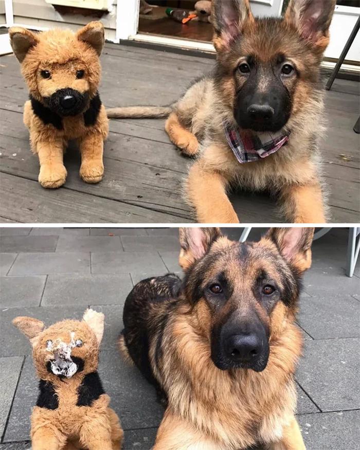 dog growing up with stuffed buddy
