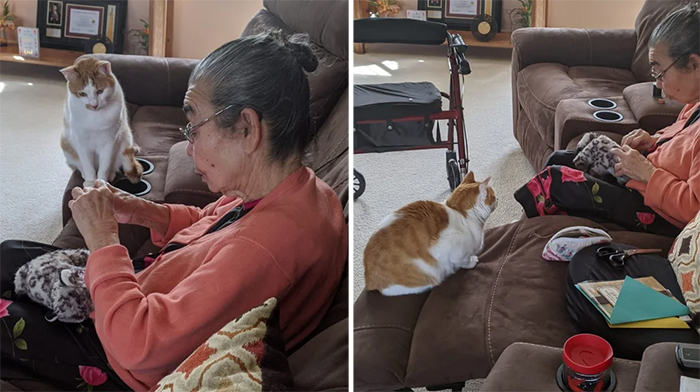 grandma sewing back ripped cat toy