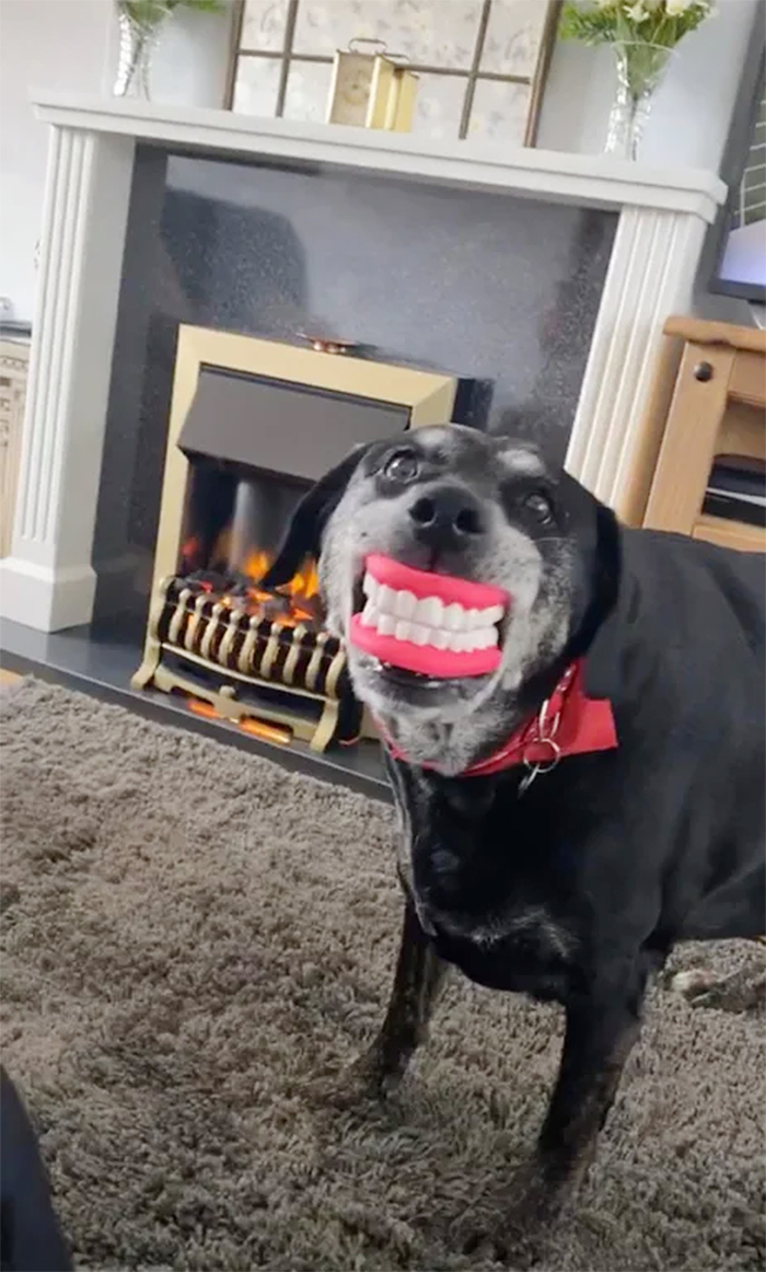 pets with their favorite toys fake denture