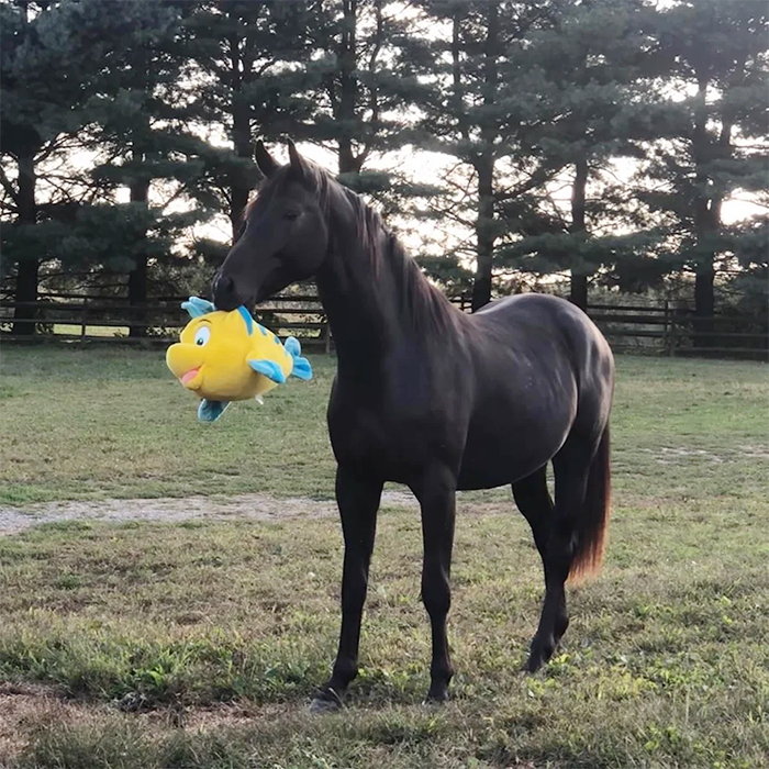 pets with their favorite toys horse
