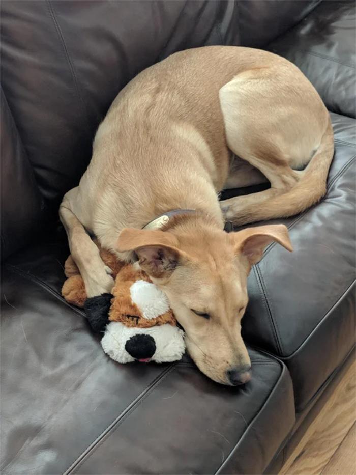 pets with their favorite toys snuggle buddy