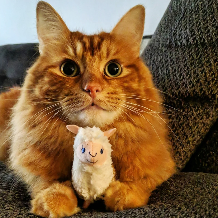 pets with their favorite toys stuffed alpaca