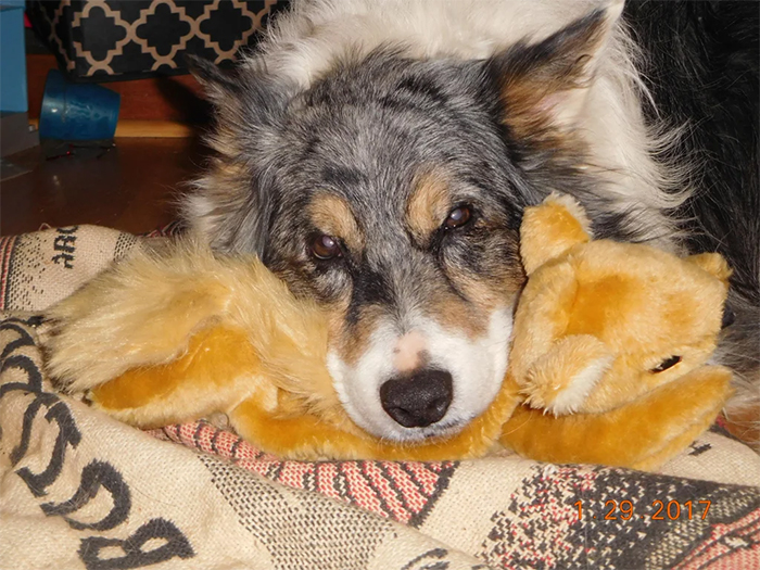 pets with their favorite toys stuffed squirrel