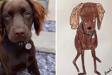 Funny pet portraits