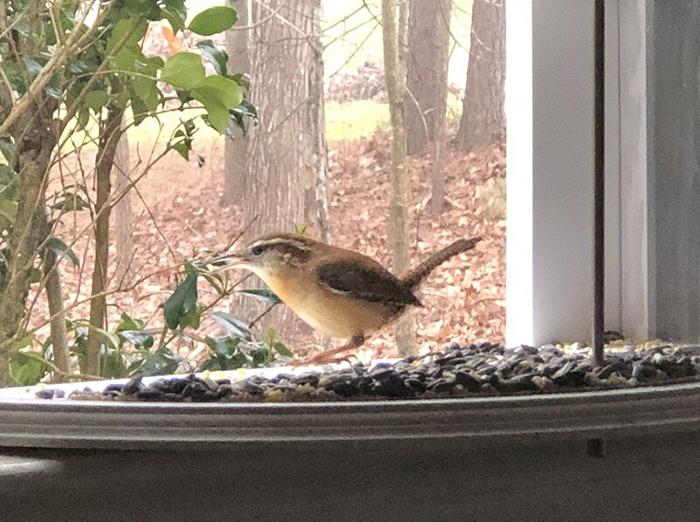 inside house bird feeder tray window attachment