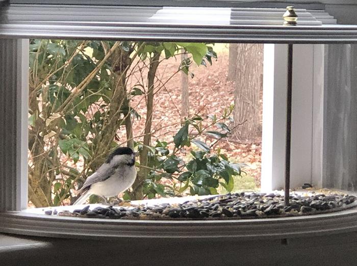 inside house bird feeder tray