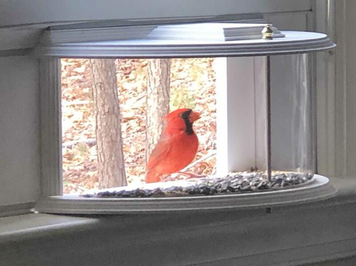 inside house bird feeder window accessory