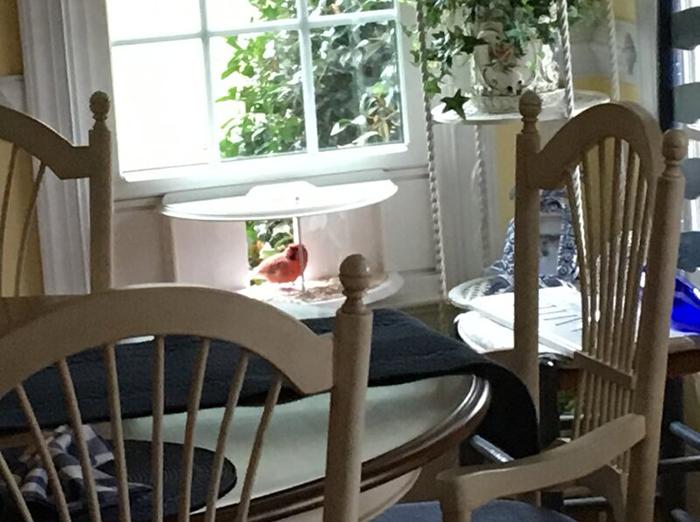 inside house bird feeder window attachment