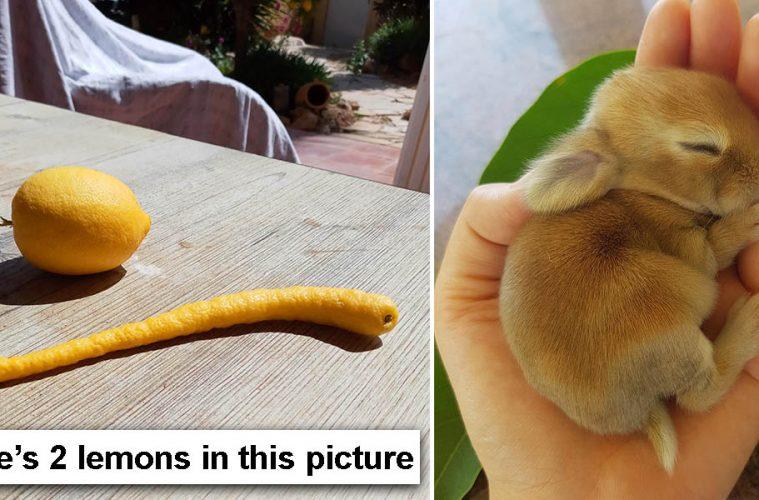 Comparison pictures