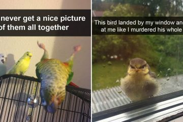 Funny bird snapchats