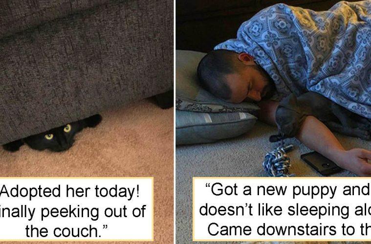 Pet adoption photos