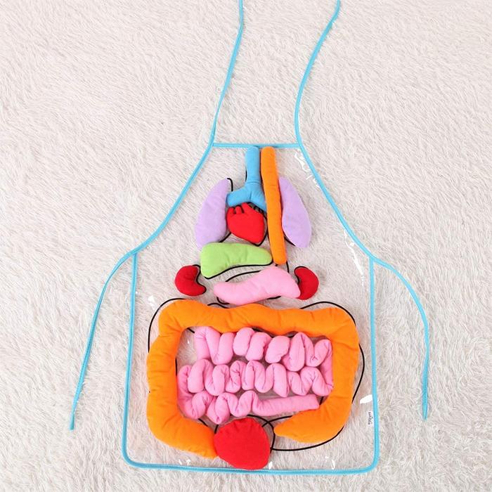 anatomy apron teaching aid