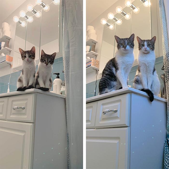 cat pose recreated