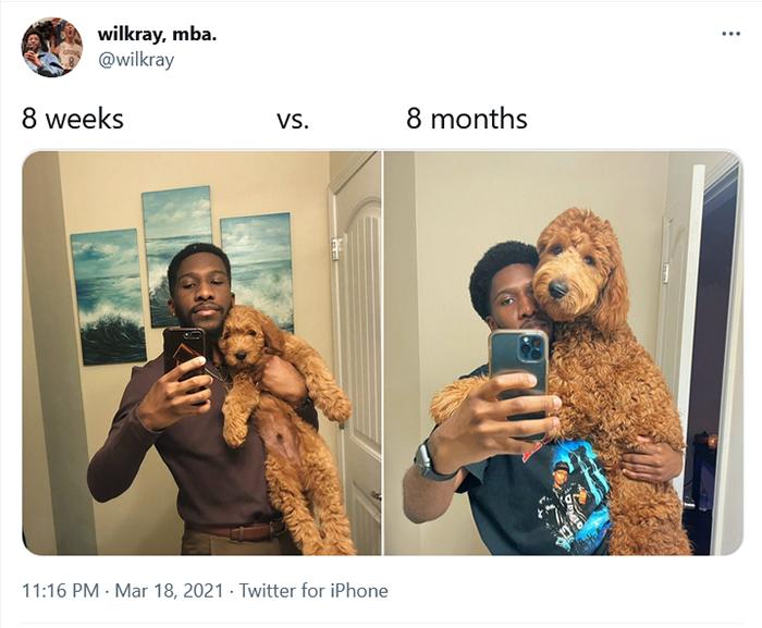 comparison images dog 8 weeks vs 8 months