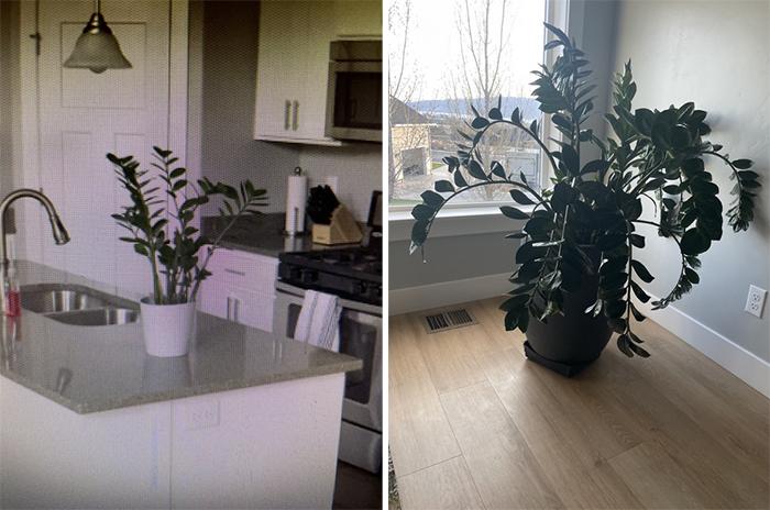 comparison images house plant turns 5