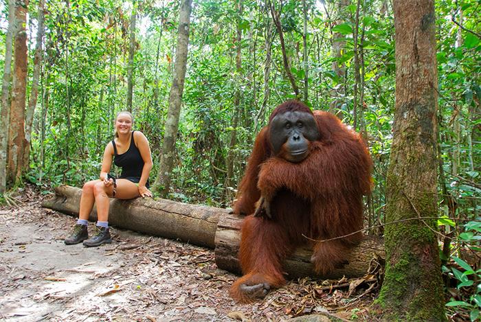human girl vs orangutan size