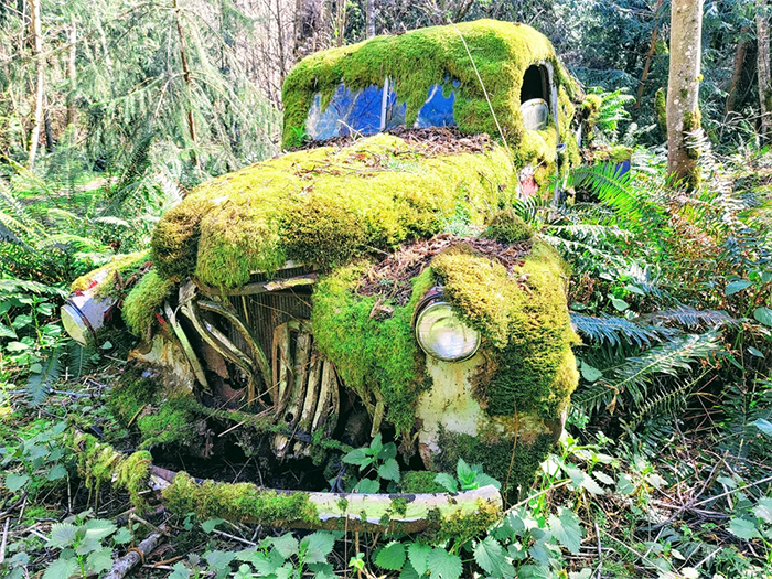 old car claimed by nature