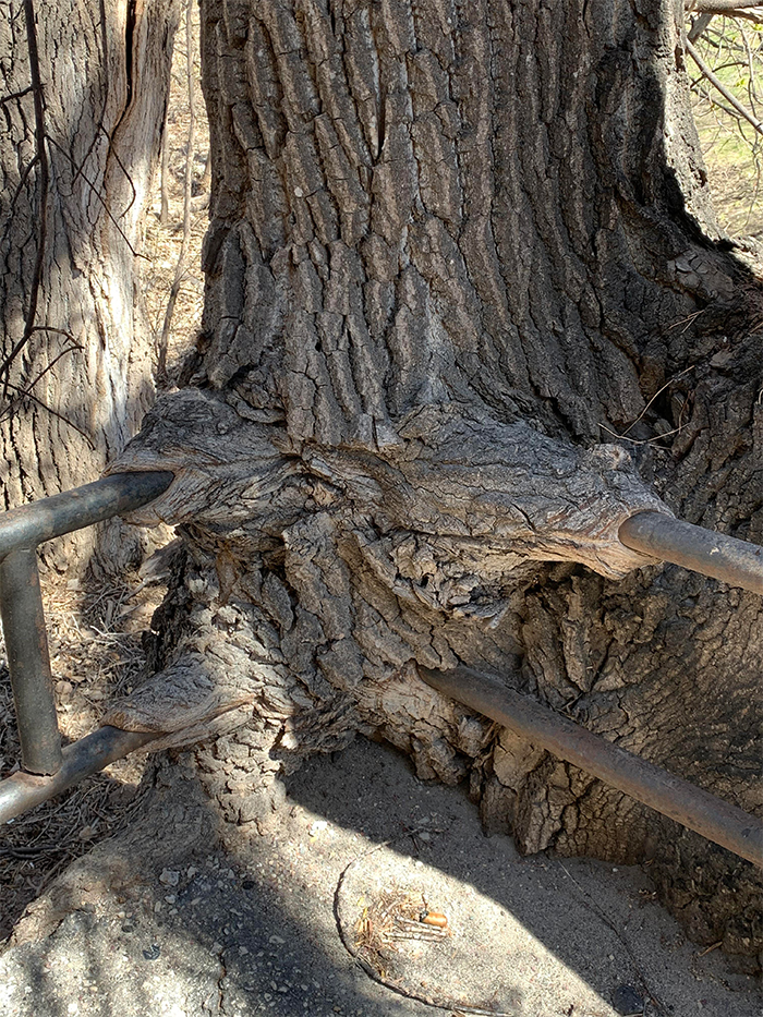 tree growing over worn down railing