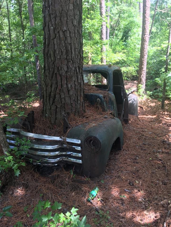 tree growing through old truck