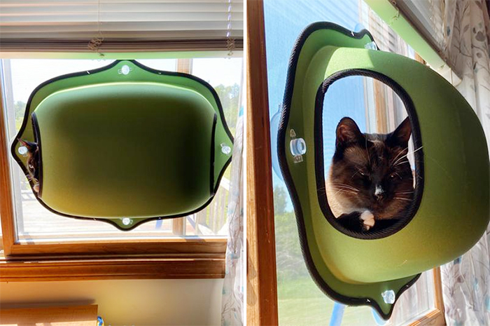 window-mounted kitty pod green