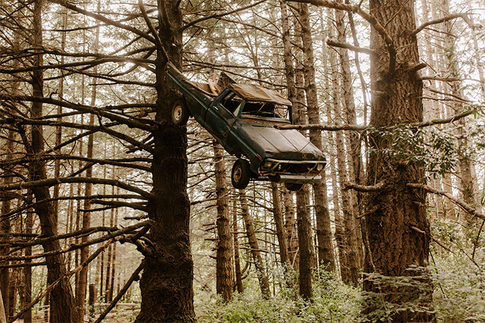 worn down car lifted by growing tree