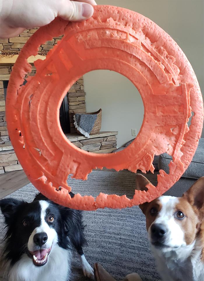 worn down overused frisbee